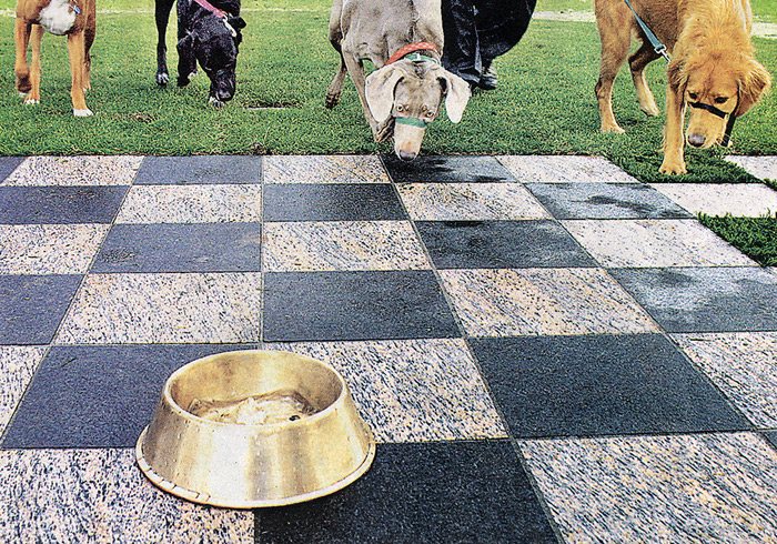 Photo of Portland Dog Bowl project